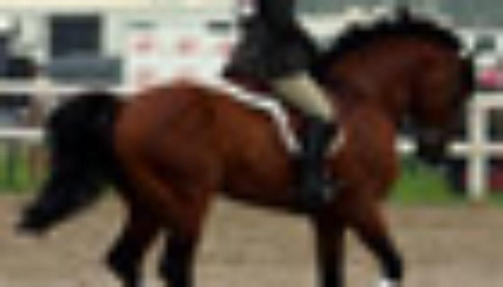 Equitazione 70