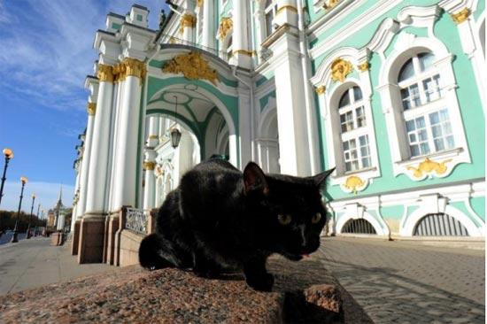 gatto bellavista