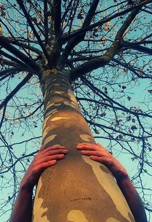 trees alber 300