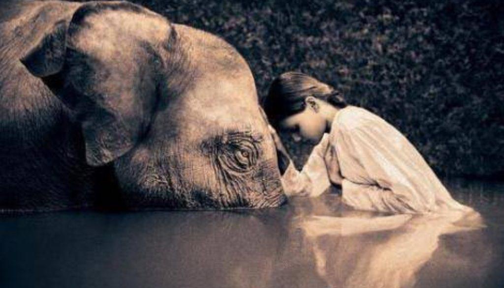 compassione 470