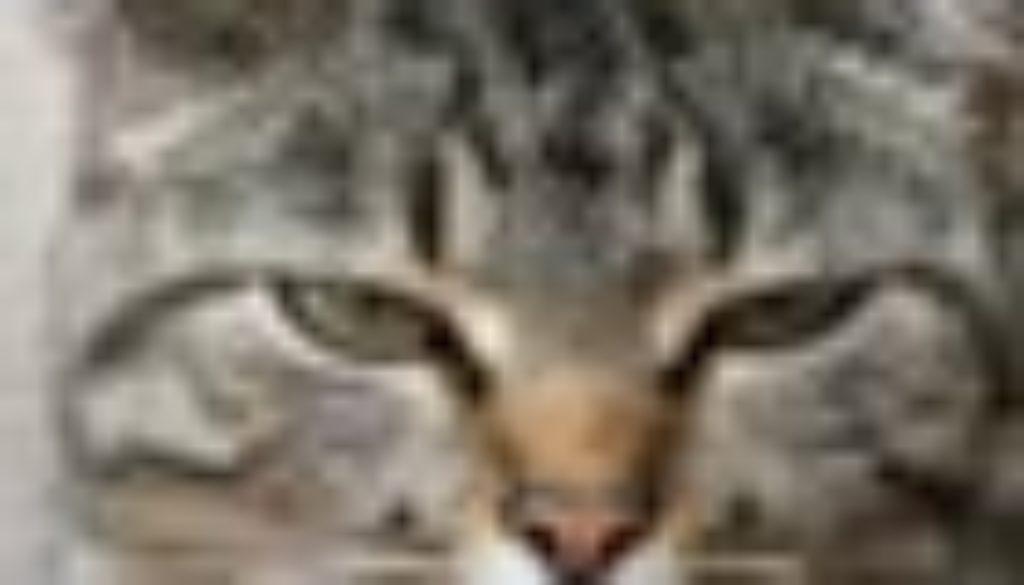 gatto 70