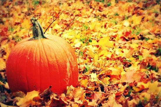 trees ottobre 550