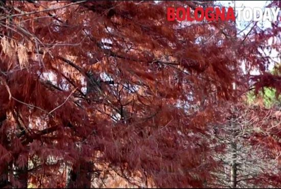 diventare alberi botoday 55