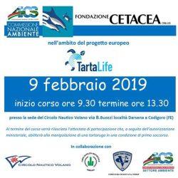 primo_soccorso_tartarughe_5