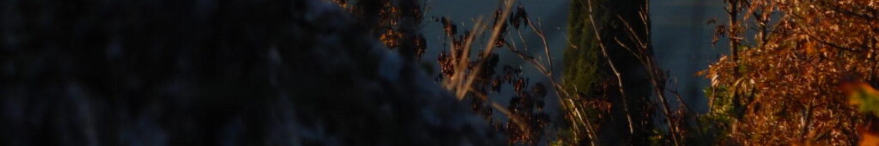 Per una selva oscura – Trekking con l'associazione Vitruvio